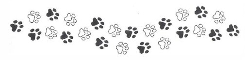 trailing paw prints